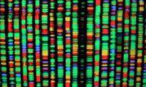 DNA: Thông điệp thần thánh