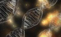 Những điểm sơ hở trong thuyết tiến hoá của Darwin (Phần 3): Lý thuyết Darwin sẽ sụp đổ hoàn toàn?