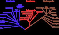 """Những điểm sơ hở trong thuyết tiến hoá của Darwin (Phần 6): Mô hình """"cây phả hệ"""" không đúng"""
