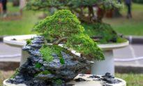 Câu chuyện về Quách Thác Đà - Trị quốc như trồng cây