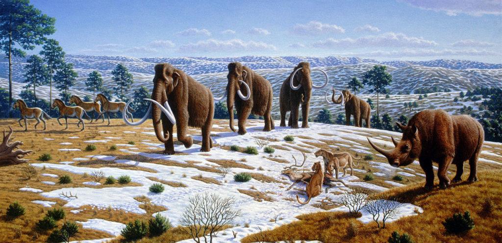 Vùng Trung Nguyên đương thời có rất nhiều chủng loại vật mới quy mô lớn, như tê giác lông mượt (Coelodonta antiquitatis) và các chủng loại quái thú khác.