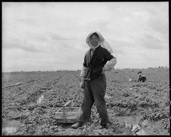 Trang trại dâu của nông dân người Mỹ gốc Nhật. Ảnh chụp tại thời điểm cách vài ngày so với ngày sơ tán người gốc Nhật đến các trại tập trung.