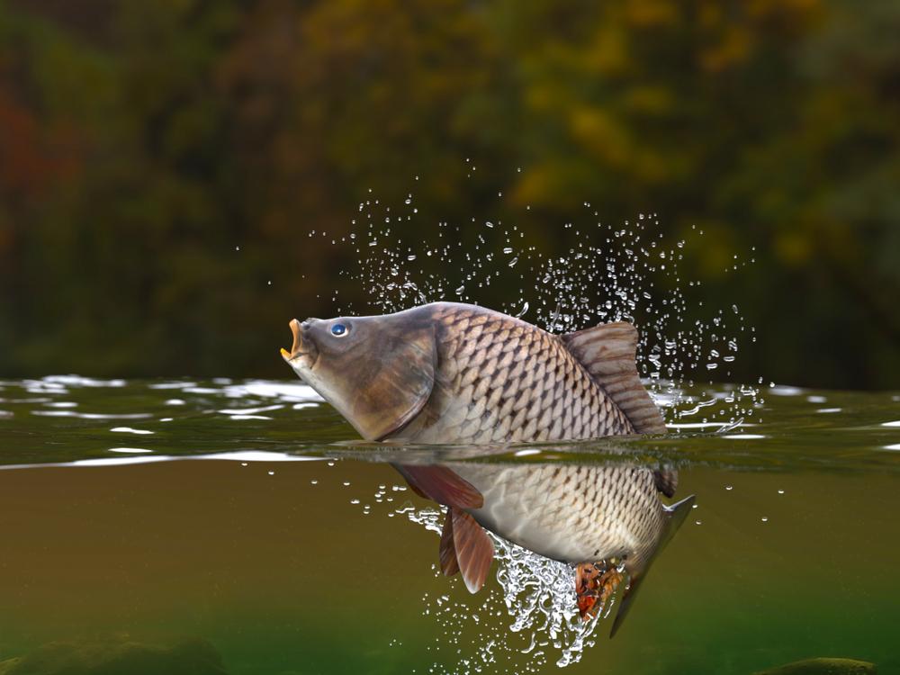 Con cá chép tầm thường sống ở đáy sông, chẳng có danh phận gì, bỗng phong vân gặp hội, thoắt cái đã trở thành rồng nơi thượng giới, phun mây nhả mù, bay lượn trên vòm trời cao.