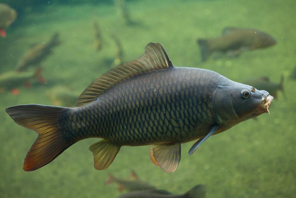 Để có phút giây tung mình toả sáng, con cá đã phải âm thầm, nhẫn nhục hàng nghìn năm. Miệng nó ngậm một viên ngọc quý, cứ lặng lẽ dưới đáy vực mà tu luyện như vậy.