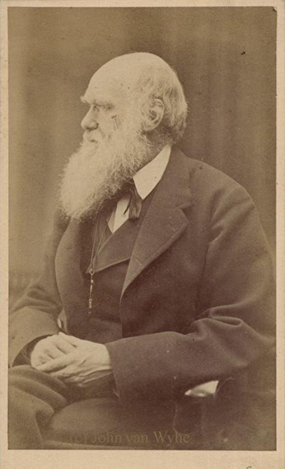 Hình: Darwin được chụp vào năm 1871 ở tuổi 62.