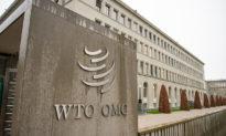 """Phần 3: Báo cáo của Cơ quan Đại diện Thương mại Hoa Kỳ """"vạch tội"""" Cơ quan Phúc thẩm - não bộ của WTO"""