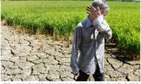 Dịch bệnh căng thẳng, miền Tây còn phải đối mặt với hạn mặn kèm mất mùa, thiếu nước