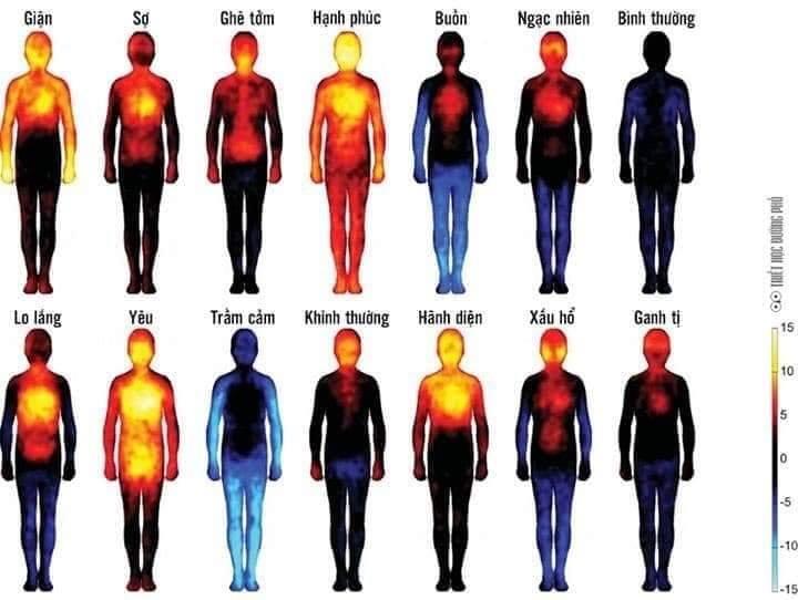 Suy nghĩ của chúng ta tạo nên cảm xúc và mỗi cảm xúc có một mức năng lượng nhất định.