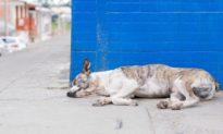 Cơ quan y tế Hồng Kông xác nhận chó cưng của bệnh nhân Covid-19 cũng bị nhiễm bệnh