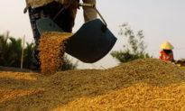 Dịch Corona phức tạp, Việt Nam có nên tiếp tục xuất khẩu gạo?