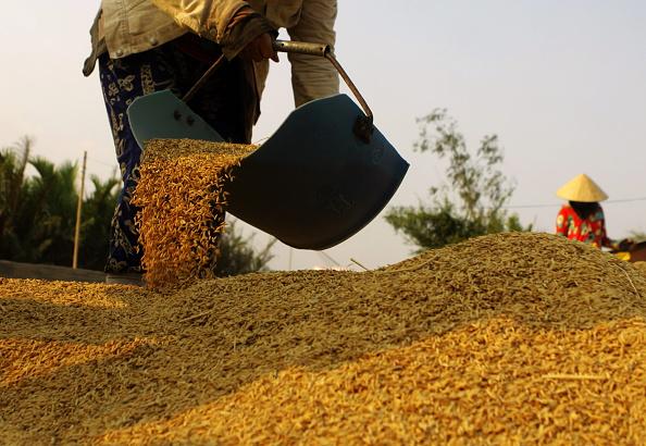 Hạt gạo Việt: Sau cả thập kỷ tổn thất vì chính sách giờ là lúc Việt Nam có cơ hội sửa chữa sai lầm