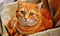 Nghiên cứu: Động vật nào dễ bị nhiễm virus Corona Vũ Hán?