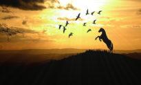 'Chim Việt ngựa Hồ': Nỗi niềm ly hương khắc khoải tâm can miền nhân thế