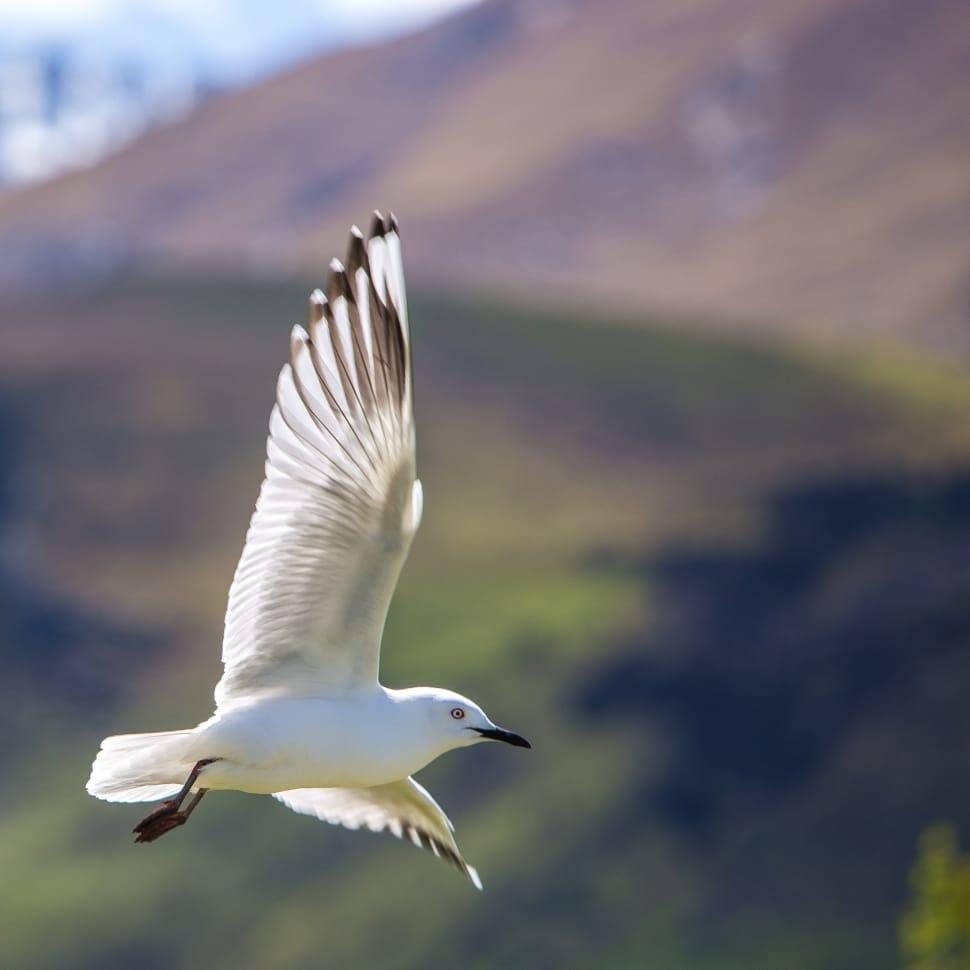 Cá ở trong nước tự do tự tại bơi lượn mà quên sự tồn tại của nước. Chim cưỡi gió (không khí) bay, có thể không cần biết đến sự tồn tại của gió (không khí).
