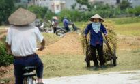 Virus viêm phổi Vũ Hán làm lộ ra quản lý yếu kém về gạo Việt - Bài học từ Thái Lan