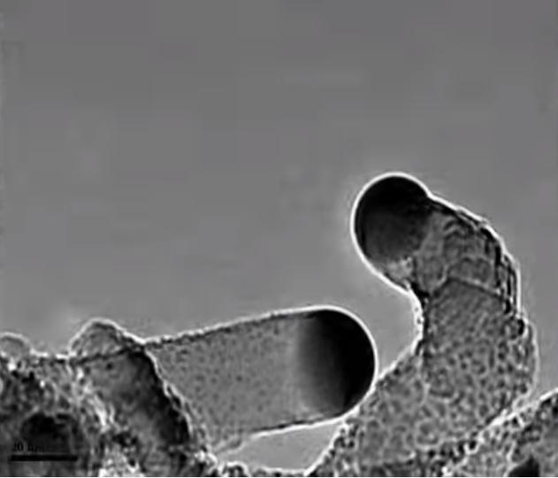 Các dây nano silicon có kích thước cực nhỏ phát triển từ các hạt xúc tác vàng.