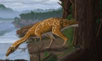 Loài khủng long lạ mới được khai quật tại Úc