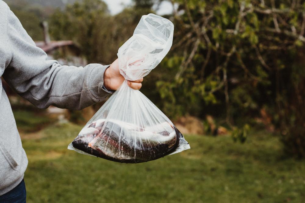 Cuối cùng đến khi thu dọn hàng, nhân lúc mọi người không để ý, ông vội vứt hơn một chục con cá biển đã ngâm formalin hơn một tuần vào thùng rác ở dưới sạp hàng.
