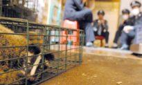Những mâu thuẫn khi Trung Quốc giải trình chính thức về chợ hải sản Hoa Nam