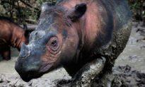 Đợt tuyệt chủng hàng loạt thứ 6 của động vật hoang dã đang tăng tốc, các nhà khoa học cảnh báo