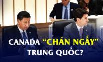 Lý do quốc gia thân thiện nhất thế giới hiện giờ cũng không ưa Trung Quốc
