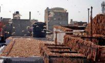 Ấn Độ đối mặt với cuộc tấn công châu chấu tồi tệ nhất trong 27 năm