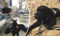 Hachiko phiên bản Mỹ: Chú chó trung thành cứu sống chủ nhân mắc bệnh hiểm nghèo