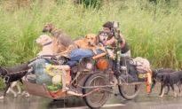 Người đàn ông đi bộ 13.000 km để cưu mang các chú chó bên đường Mexico