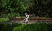 Virus Bắc Kinh chứa đột biến D614G, tăng lây nhiễm tới 9 lần