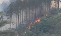 Nghiên cứu phát hiện khói do cháy rừng có thể làm triệu chứng viêm phổi Vũ Hán trở nặng