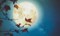 Bóng trăng qua cửa