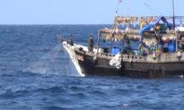 Các tàu đánh cá Trung Quốc đã lấy 1/2 tỷ đô la mực bất hợp pháp từ Bắc Triều Tiên.