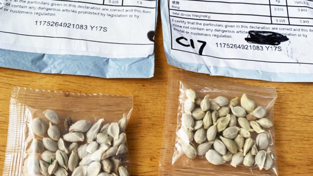 Hạt giống được gửi từ Trung Quốc đến nhà dân Mỹ là 'trò lừa đảo'