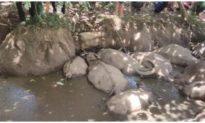 Đàn trâu 14 con của nhiều hộ dân bỗng lăn ra chết, nghi bị đầu độc