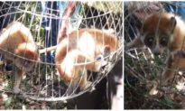 Bình Định thả 4 cá thể khỉ quý hiếm về rừng