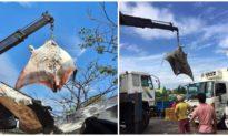 Ngư dân Bình Thuận bắt được cá đuối nặng gần 1 tấn