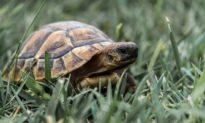 Triết lý con rùa: Không để ý, không tranh cãi, không tức giận