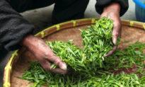 5 mẹo uống trà giúp cải thiện sức khỏe