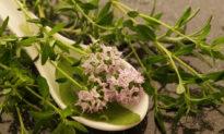 Khử hôi miệng và kháng nấm, sử dụng Bách lý hương