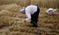 Trung Quốc cấm các video ăn uống 'mukbang' trong bối cảnh đất nước thiếu lương thực