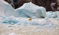 28 nghìn tỷ tấn băng tan chảy từ năm 1994: Nước biển dâng và hệ lụy với Việt Nam