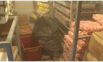 Hải Phòng phát hiện 24 tấn nội tạng lợn bị nhiễm dịch tả lợn Châu Phi