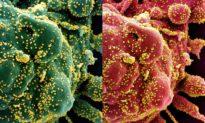 COVID-19: Tái nhiễm làm lung lay hiệu quả của các vaccine tiềm năng