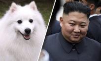 Lý do đằng sau việc Kim Jong Un ban hành lệnh 'bắt giữ' chó cưng?