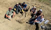 Một hộp sọ khủng long ba sừng nặng 1360 kg được khai quật ở Nam Dakota