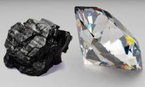 Hòn than và viên kim cương - Làm thế nào để thành công