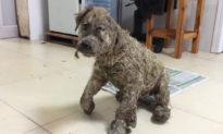 Cái kết hạnh phúc của chú chó từng hấp hối vì bị ngâm trong keo
