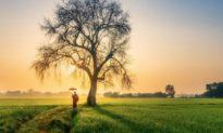 Chu Dịch: Giữ vững nơi thấp của cuộc đời mới là cao nhân