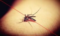 7 phương pháp tự nhiên giúp đuổi muỗi