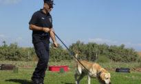 Những dấu hỏi bị bỏ ngỏ đằng sau việc chó có thể đánh hơi chính xác COVID-19